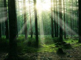 Groupement forestier, massif forestier, acquisition massif forestier